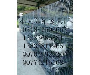 24笼位兔笼/9笼位兔笼/12笼位兔笼/养兔设备/养兔笼具